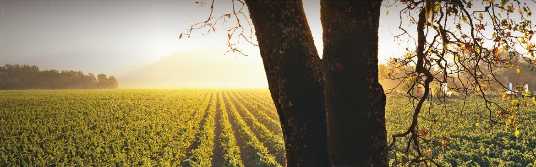 vineyard_header